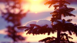 Desktop Wallpaper: Snow on pine tree