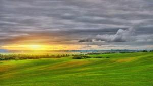 Desktop Wallpaper: Green grass field
