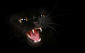 Desktop Wallpaper: Aggressive Black Cat
