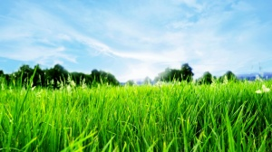 Desktop Wallpaper: Green Grass