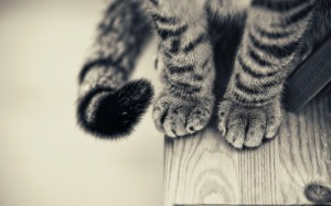 Desktop Wallpaper: Brown Tabby Cat