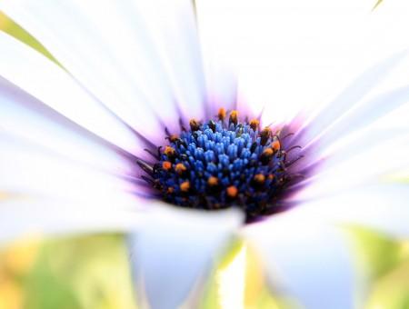 White flower blue purple center wallpapers every day white flower blue purple center mightylinksfo