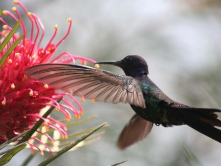 Green And Black Humming Bird