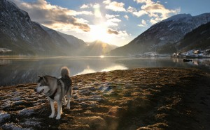 Desktop Wallpaper: Siberian Husky