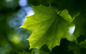 Desktop Wallpaper: Green Leaf