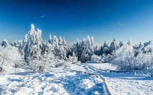 Desktop Wallpaper: Snow Covered Trees A...