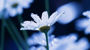 Desktop Wallpaper: White Flowering Flow...