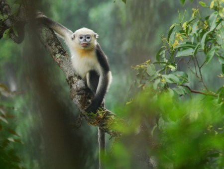 Brown And White Monkey Perch On Tree Branch During Day In Macro Photography