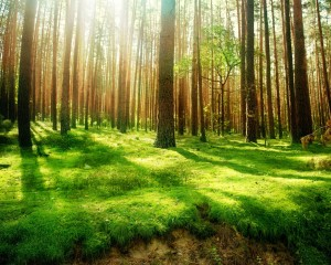 Desktop Wallpaper: Forest Trees And Gre...