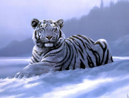White And Black Tiger Resting On Snow Covered Ground During Daytime