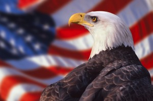Desktop Wallpaper: American Eagle With ...
