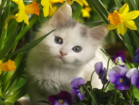 White Kitten Sitting Near Yellow Flowers