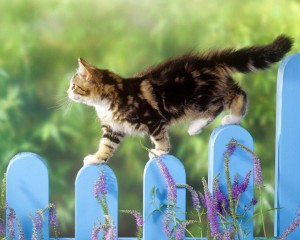 Desktop Wallpaper: Brown Tabby Cat On B...