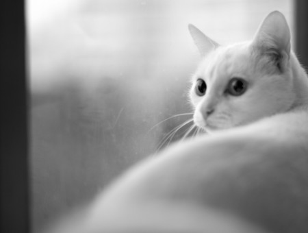 Grayscale Photography Of A White Cat
