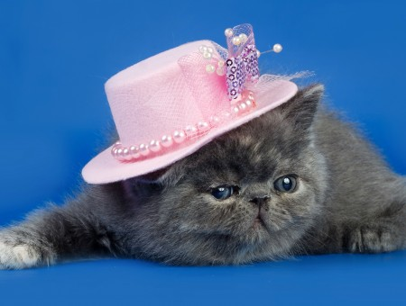Gray Short Fur Cat Wearing Pink Hat