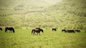 Horses On Green Meadow Near Green Trees During Daytime - скачать обои на рабочий стол