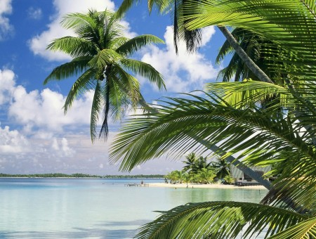 Coconut Palm Trees On Beach Under Blue Cloudy Sky During Daytime