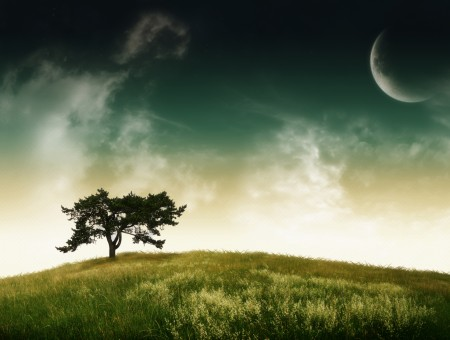 Moon Over Green Tree In Green Meadow