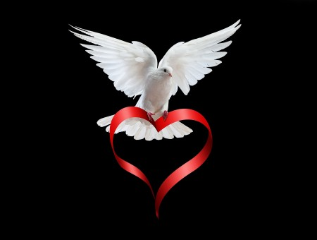 White Dove With Red Heart Formed Ribbon