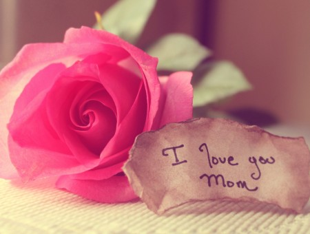 Pink Rose With Brown Paper On The Side Written Text I Love You Mom