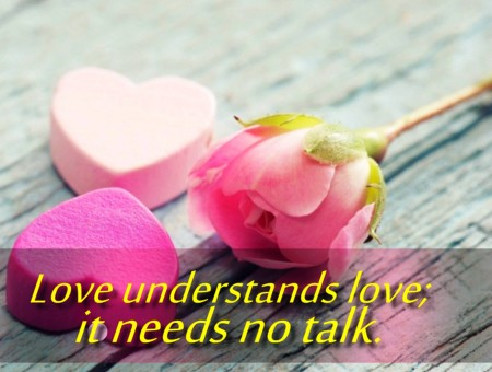 Love Understands Love It Needs No Talk Pink Rose