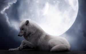 Desktop Wallpaper: White Wolf Under Moo...