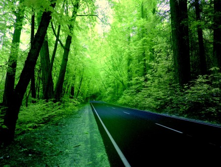 Green Forest With Road Pavement