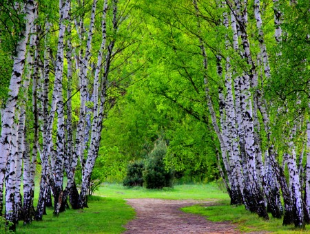 Green Leafed Trees Beside Brown Narrow Pathway
