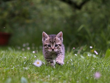 Black And Brown Kitten On Green Grass During Daytime