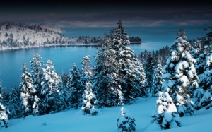 Desktop Wallpaper: Snow Covered Pine Tr...