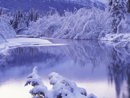 Body Of Water And Snow Covered Ground And Trees