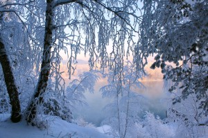 Desktop Wallpaper: Snow Covered Trees D...