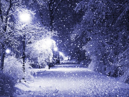 Snow Falling On Trees, Roads And Turned On Street Lights During Night Time