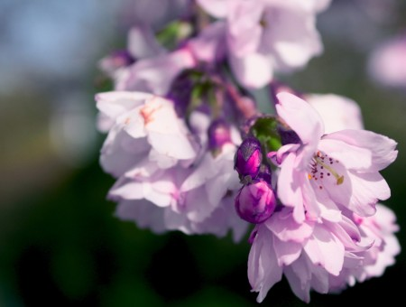 White And Purple Flowers During Daytime With Blurred Background Photography
