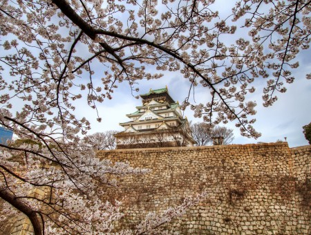 Sakura Trees In Front Of White And Beige Temple During Daytime