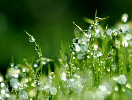 Green Plants With Water Droplets