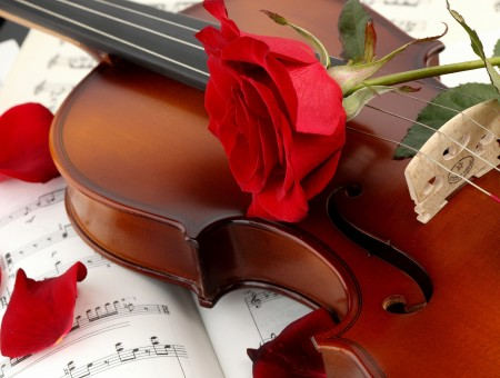 Red Rose On Brown Violin Above Musical Score With Rose Petals