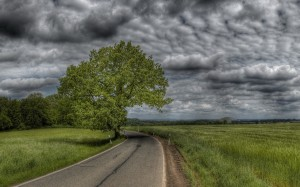 Desktop Wallpaper: Black Top Road Betwe...