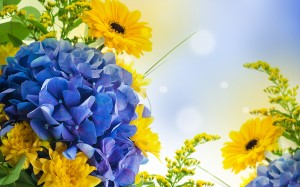 Desktop Wallpaper: Sunflower And Blue F...