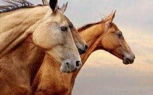 Desktop Wallpaper: Brown Horses