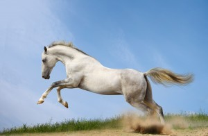 Desktop Wallpaper: White Horse Running ...