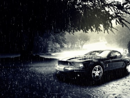 Black Viper Mustang Under Tree While Raining Hard