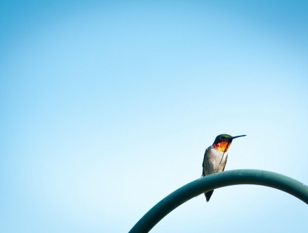 Hummingbird Perch On Arch Metal