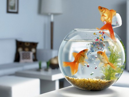 Orange Fish On Fish Bowl During Daytime