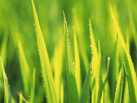 Macroshot Of Grass