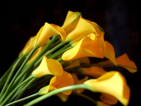 Yellow Flowers In Macro Lens Photography
