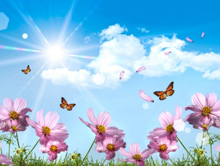 Orange And Black Butterflies Above Pink Flowers In Green Grass Field Under Sunny Cloudy Blue Sky During Daytime