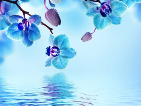 Close Up Photo Of Blue Petaled Flower Near Water During Daytime