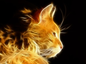 Desktop Wallpaper: Yellow Flame Cat Ill...