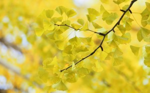 Desktop Wallpaper: Yellow Leaves On Bra...